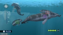 Screenshot for Endless Ocean 2: Adventures of the Deep - click to enlarge