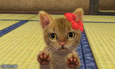 How To Name Your Cat On Nintendogs