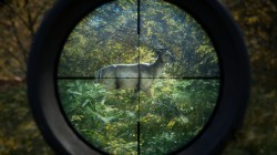 Screenshot for theHunter: Call of the Wild - click to enlarge